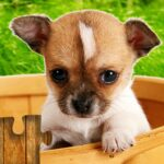 Dogs Jigsaw Puzzles Game – For Kids Adults 25.0 MOD Unlimited Money